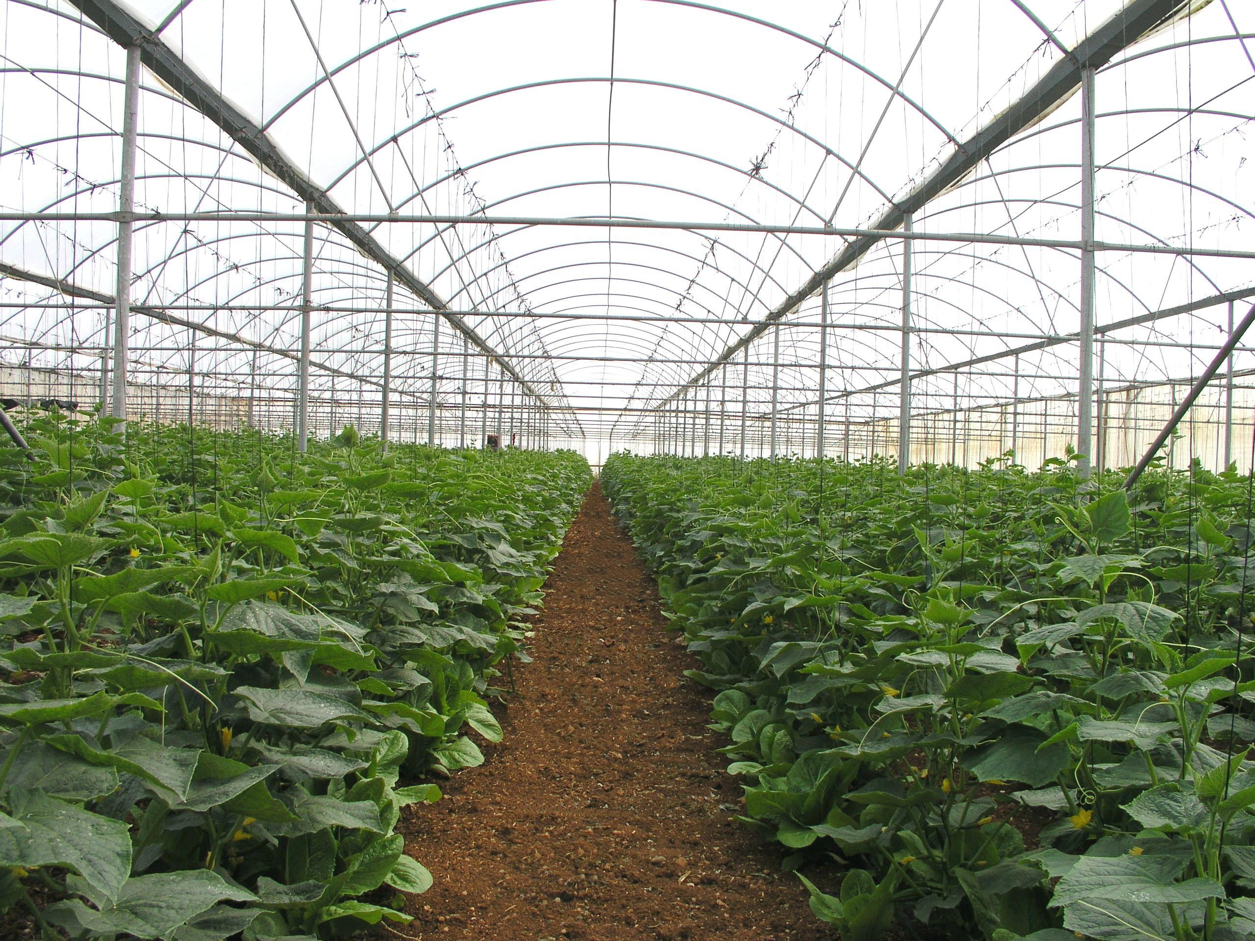 KRITIFIL® greenhouse filmsLifetime