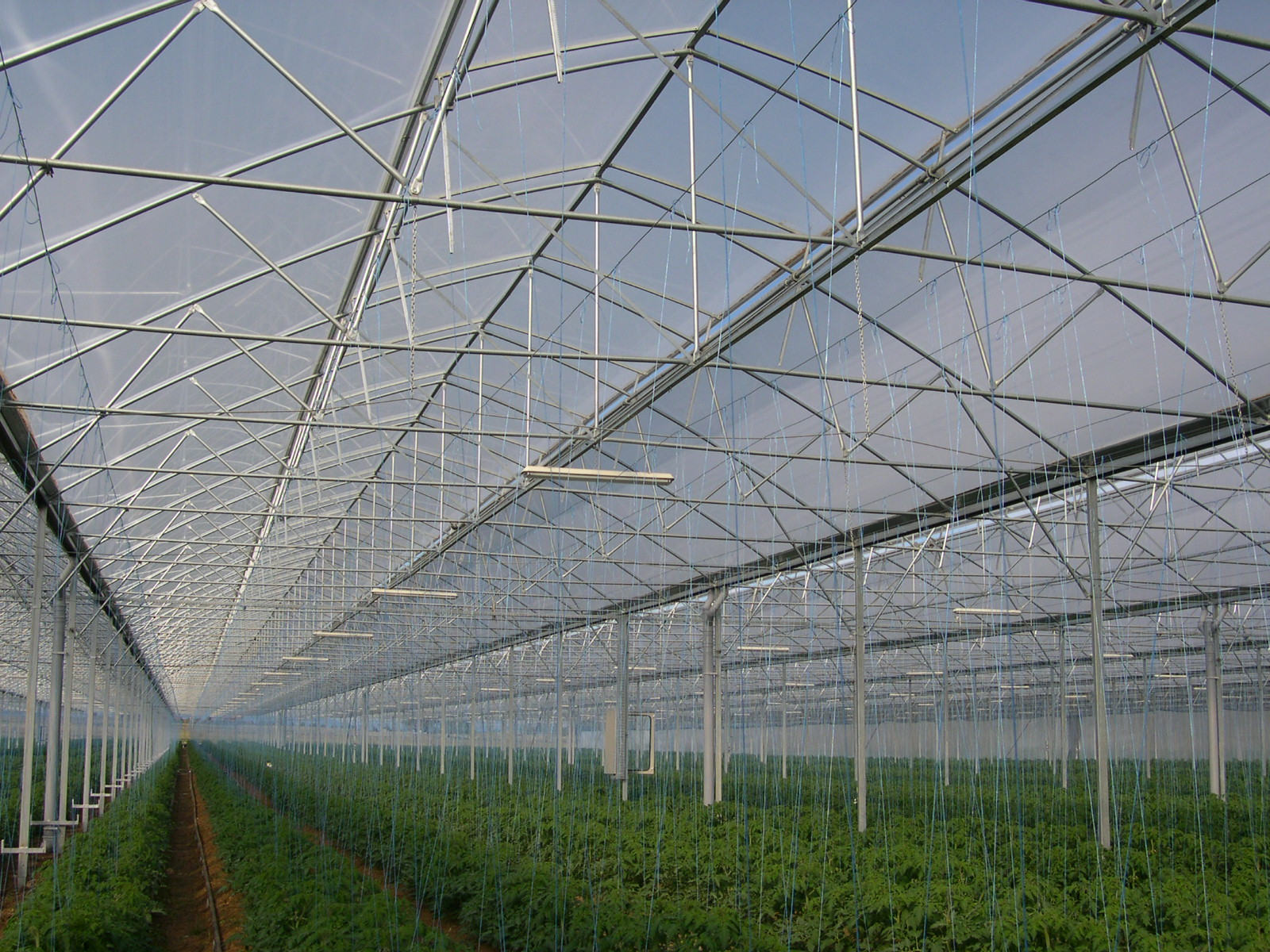 KRITIFIL® greenhouse filmsAnti-mist effect